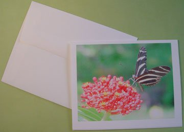 Butterfly &  tropical Flower portrait - Personalized Notecards