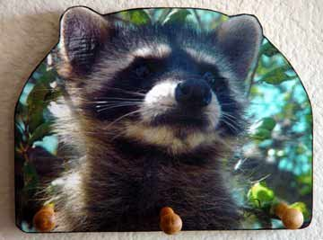 Raccoon baby bandit racoon DECORATIVE WOODEN KEY HOLDER. - Rack Holder