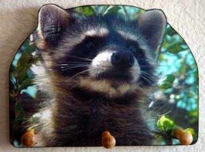 Raccoon baby bandit racoon DECORATIVE WOODEN KEY HOLDER. - Rack Holder