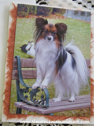 Papillon dog on park bench toy dog papillon breed handmade notecards  custom cards