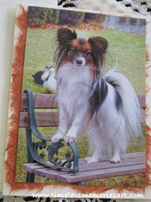 Papillon dog on park bench toy dog papillon breed handmade notecards  custom cards
