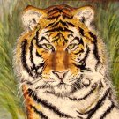 Tiger Portrait (Stripes)