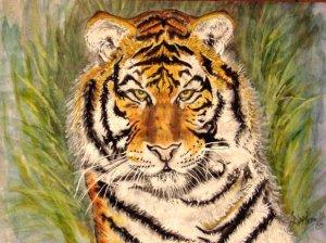 Tiger Portrait (Stripes)