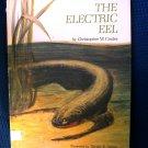 The Electric Eel Christopher Coates David Stone Vintage