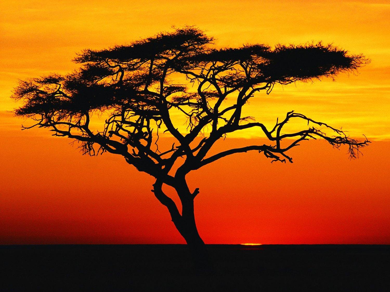 22 Key ANTIQUE Mbira/Thumb Piano/Karimba/Kalimba from Zimbabwe! #a