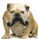 Humunga Stache for Dog Ball Toy Big Medium Size Junior Fetch Moody Moustache Fun