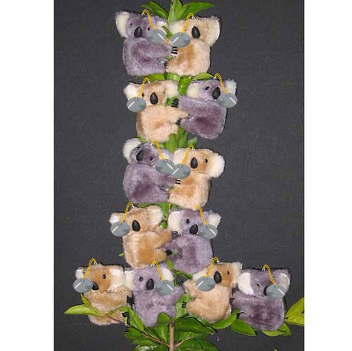 Clip on Koala Bears from Australia ( pack of 12 bears ) with suction caps (0060s)