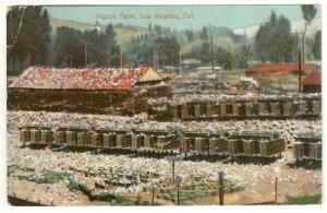 Color Postcard  Pigeon Farm Los Angeles  California