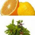Citrus Herb Hawaiian Seasoned Salt, grinder bottle