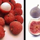 Fig Lychee Conditioning Scented Pumice Stone