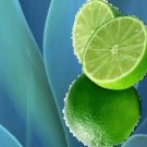 Agave Lime Scented Hand Sanitizer