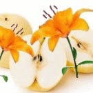 Asian Pear & Lily Scented Hand Sanitizer