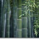 Bamboo Hemp Scented Hand Sanitizer