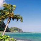 Hawaiian Breeze Scented Kona Coffee Exfoliating Face Scrub