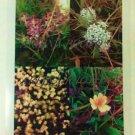 Lava Mountain Flower collage photo 8 x 10 print new