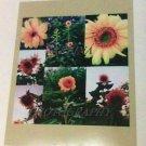 Sunflower Garden collage photo 8x10 print  new