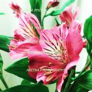 Flowers pink 8x10 print photo new