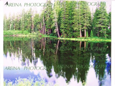 Mountain Forest Pond view 8 x 10 photo print new