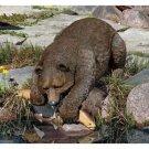 Fishing Bear Culpture Wildlife Bear Hunting