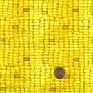 """I Spy 6 by 9 inch Corn Eat Your Veggies Vegetable  Novelty Fabric 6"""" x 9""""  pc"""