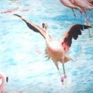 MadieBs Pink Flamingos Cotton  Personalized Custom  Pillowcase  w/Name