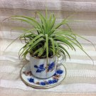 Tilla Critters Tea Time One of a Kind Air Plant Creations from Chili Fiesta Ha..