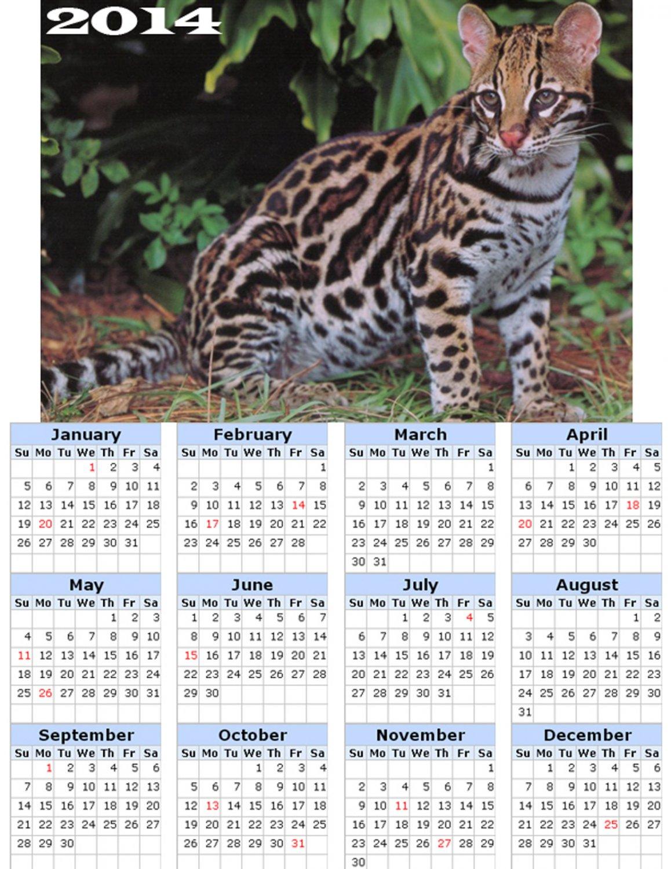 2014 calendar toolbox magnet refrigerator magnet Cats #3