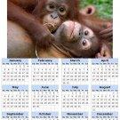 2014 calendar toolbox magnet refrigerator magnet Primates #3