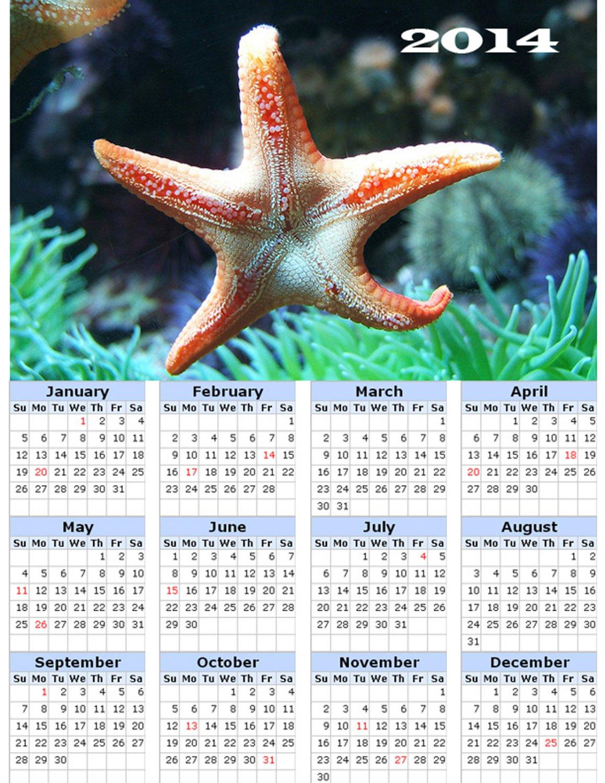 2014 calendar toolbox magnet refrigerator magnet Ocean Life #5