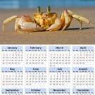 2014 calendar toolbox magnet refrigerator magnet Ocean Life #6