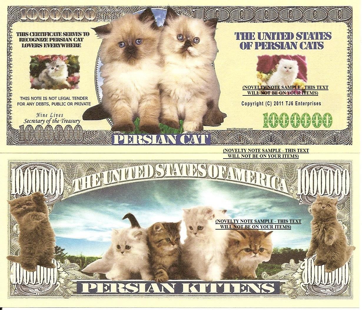 PERSIAN CAT KITTENS MILLION DOLLAR BILLS x 4 NEW