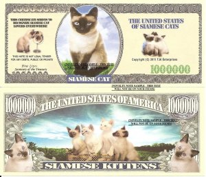 Siamese Cats and Kittens Million Dollar Bills x 4 New