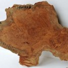 Brown Mallee Burl Hardwood Woodworking For Pool Cues Guitars Handles Reel Seats