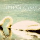 "White Swan Aqua Lake Como NJ 5"" x 7"" HOT Fine Art Photographic PRINT made in USA"