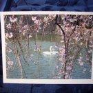 Swans (FS-SW)