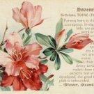 Birthday Month NOVEMBER Vintage Grtg. Postcard VP-6518