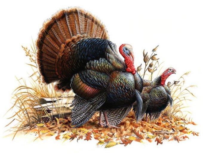 Wild turkey pair cross stitch pattern l k for Turkey country arts and crafts