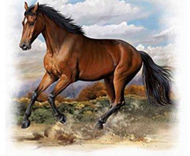 American Quarter Horse Cross Stitch Pattern***L@@K***