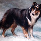 Scotch Collie Cross Stitch Pattern***L@@K***