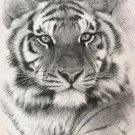 B & W Siberian Tiger Cross Stitch Pattern***LOOK***
