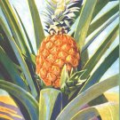 Pineapple Plant Cross Stitch Pattern***L@@K***