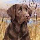 ChocoLate Lab Cross Stitch Pattern***LOOK***