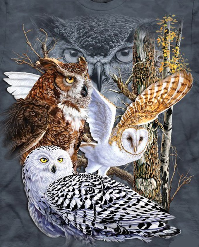 Owls Of The World Cross Stitch Pattern***LOOK***