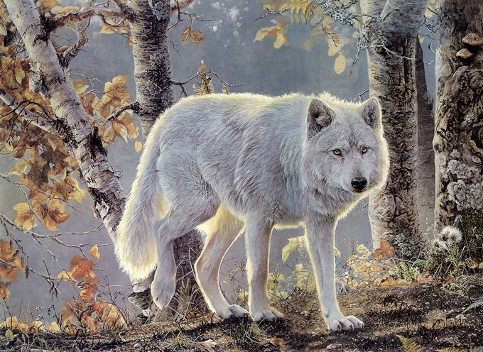 Autum White Wolf Cross Stitch Pattern***LOOK***