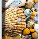 SEA SHELLS BEACH STONES PHONE JACK TELEPHONE WALL PLATE BATHROOM SUMMER FL HOUSE
