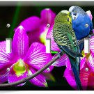 LOVE BIRDS PARROTS ORCHID FLOWERS TRIPLE LIGHTSWITCH WALL PLATE COVER HOME DECOR