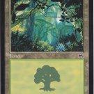 Forest 347 (MTG) - Near Mint