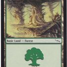 Forest 304 (MTG) - Near Mint