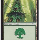 Forest 305 (MTG) - Near Mint