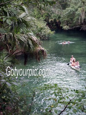 Florida Tropical Lagoon Original Print 11x14